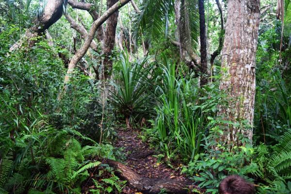 Džungle v národním parku Jozani na Zanzibaru: mangrovy, prales a opice